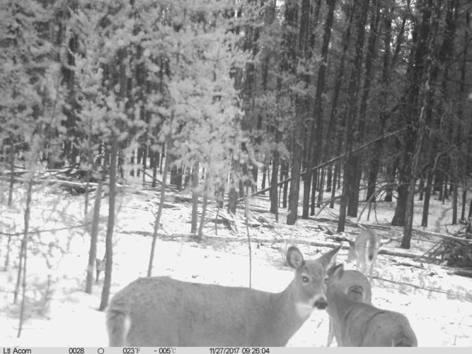Ltl-acorn-trail-camera-taken-photo- (18)