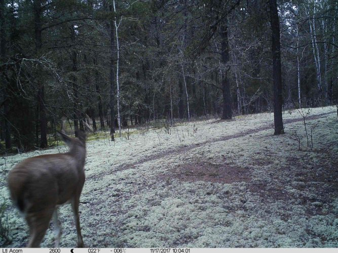 Ltl-acorn-trail-camera-taken-photo- (19)