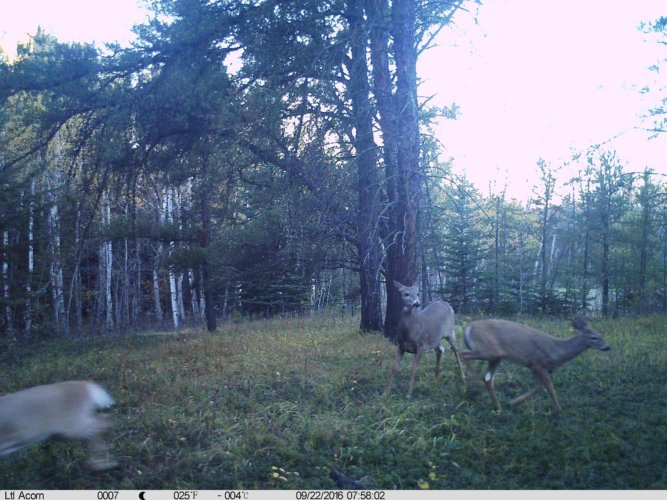 Ltl-acorn-trail-camera-taken-photo- (20)