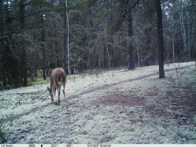 Ltl-acorn-trail-camera-taken-photo- (23)