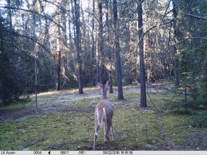 Ltl-acorn-trail-camera-taken-photo- (28)