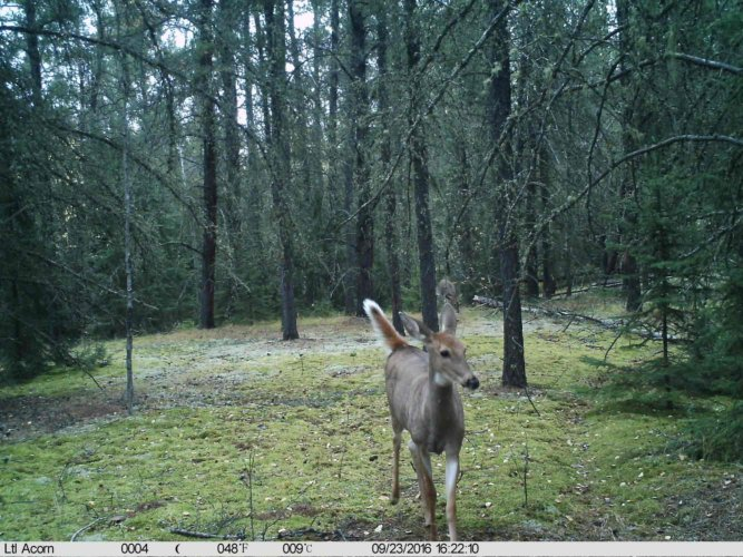 Ltl-acorn-trail-camera-taken-photo- (34)