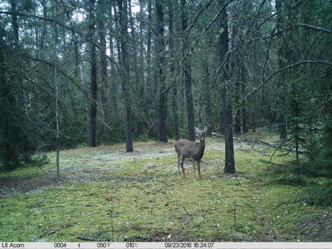 Ltl-acorn-trail-camera-taken-photo- (36)
