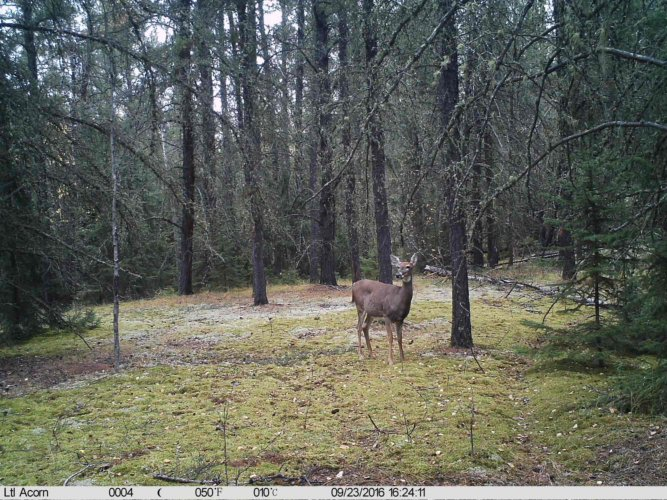 Ltl-acorn-trail-camera-taken-photo- (39)