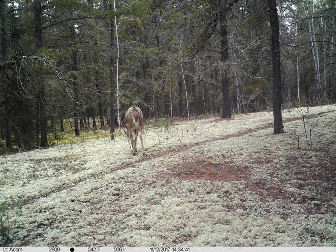 Ltl-acorn-trail-camera-taken-photo- (4)