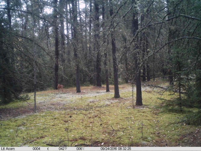 Ltl-acorn-trail-camera-taken-photo- (44)