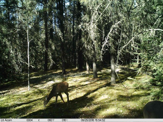 Ltl-acorn-trail-camera-taken-photo- (48)