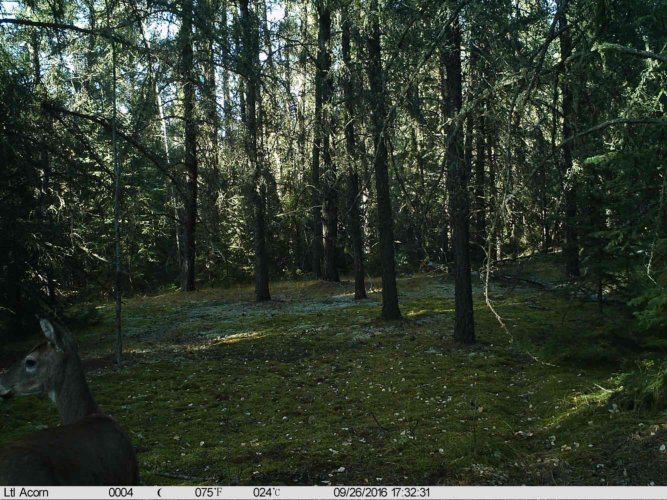 Ltl-acorn-trail-camera-taken-photo- (52)