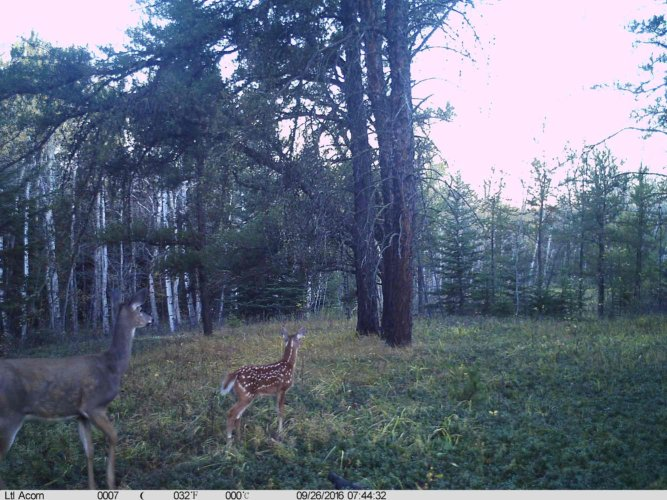 Ltl-acorn-trail-camera-taken-photo- (53)