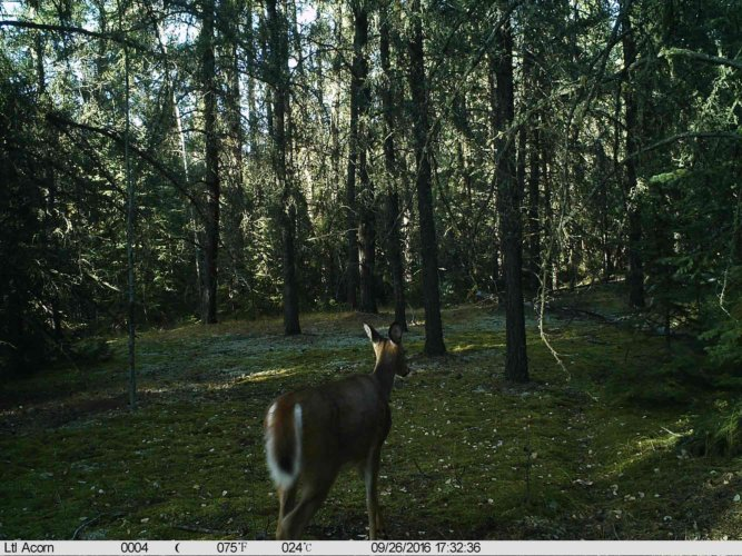 Ltl-acorn-trail-camera-taken-photo- (55)