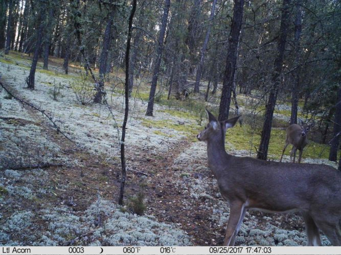 Ltl-acorn-trail-camera-taken-photo- (58)