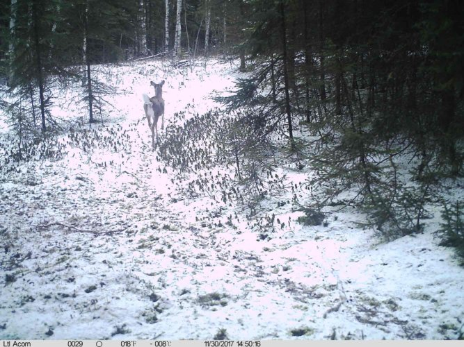 Ltl-acorn-trail-camera-taken-photo- (59)