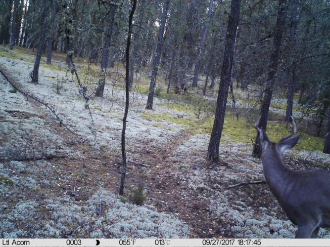 Ltl-acorn-trail-camera-taken-photo- (67)