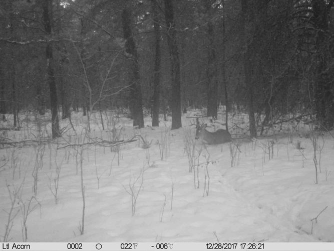 Ltl-acorn-trail-camera-taken-photo- (75)