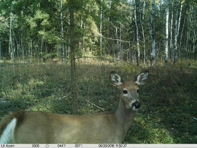 Ltl-acorn-trail-camera-taken-photo- (77)