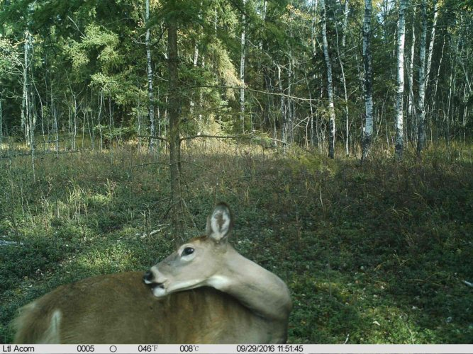 Ltl-acorn-trail-camera-taken-photo- (78)