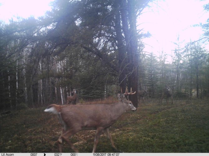 Ltl-acorn-trail-camera-taken-photo- (9)